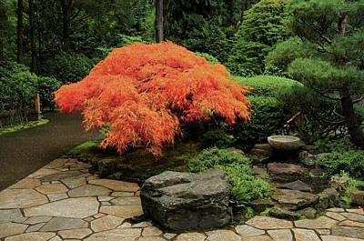 Intimate Garden Photograph - Japanese Maple In Autumn, Portland by Michel Hersen