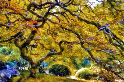 Digital Art - Japanese Maple In Washington Park by Kaylee Mason