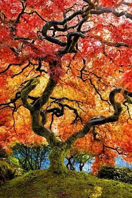 Photograph - Japanese Maple by Jane Girardot