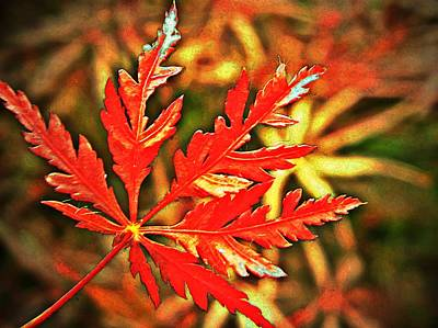 Chinese Red Maple Tree Photograph - Japanese Maple Leaf  by Chris Berry