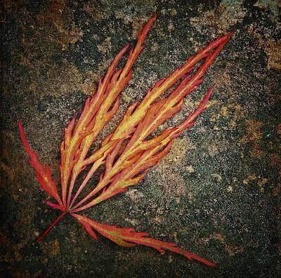 Photograph - Japanese Maple Leaf On Stone by Chris Berry