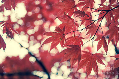 Chinese Red Maple Tree Photograph - Japanese Maple Leaves - Vintage by Hannes Cmarits