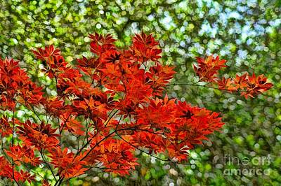 Digital Art - Japanese Maple by Peggy Hughes