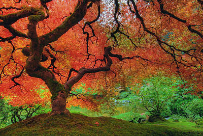 Landscape Photograph - Japanese Maple Tree In Autumn by David Gn