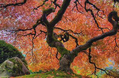 Pacific Northwest Photograph - Japanese Maple Tree In Fall by David Gn