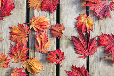 Maple Leafs Photograph - Japanese Maple Tree Leaves On Wood Deck by David Gn