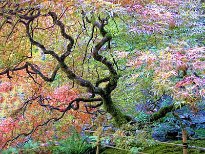 Japanese Maple Art Print by Wendy McKennon