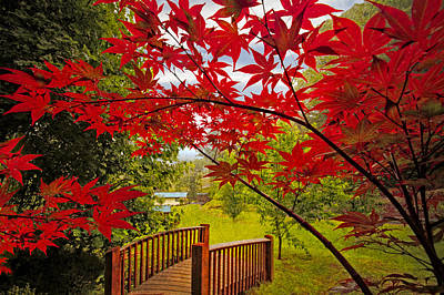 Japanese Maples Art Print by Debra and Dave Vanderlaan