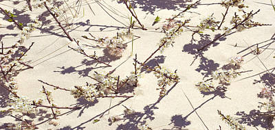 Photograph - Tashmoo Sand Dune With Blossoms by Charles Harden
