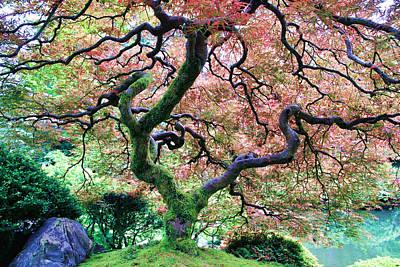Japanese Tree In Garden Art Print