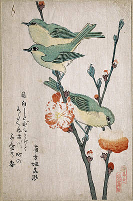 Japanese White-eyes Perching On A Branch Of Peach Tree Art Print