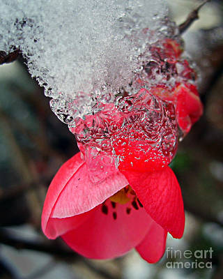 Photograph - Ice Flower by Nina Ficur Feenan
