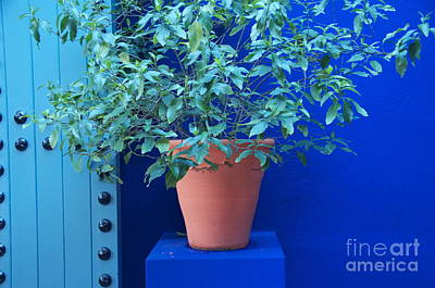 Photograph - Jardin Majorelle by Louise Fahy