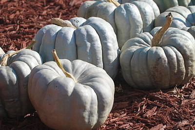 Christmas Photograph - Jarrahdale Pumpkins by Cathy Lindsey