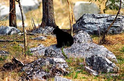 Jasper - Black Bear Cub Alone Art Print by Terry Elniski