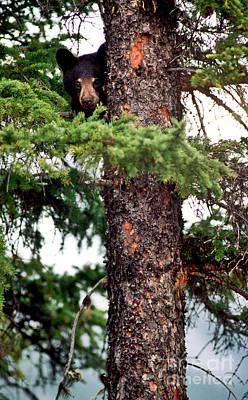 Trees Photograph - Jasper - Black Bear Cub In Tree 1 by Terry Elniski