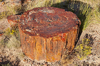 Photograph - Jasper Forest Petrified Forest National Park by Fred Stearns