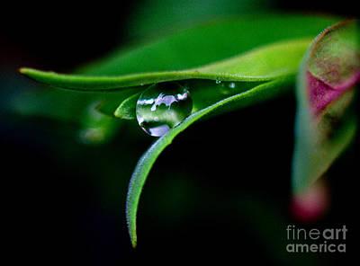 Photograph - Jasper - Rain Drop Plant by Terry Elniski
