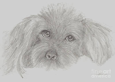 Drawing - Jasper Sketch by Nan Wright