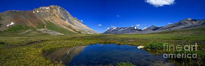 Photograph - Jasper - Wilcox Pass Panorama by Terry Elniski