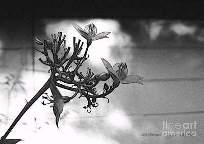 Photograph - Jatropha In Late Afternoon by Ginny Schmidt