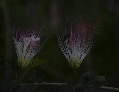 Photograph - Java Island Flowers by Miguel Winterpacht