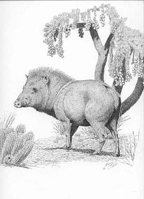 Drawing - Javelina  by Darcy Tate