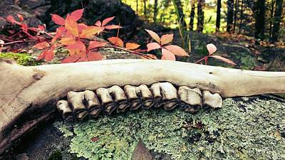 Mooses Tooth Photograph - Jaw Bone by Tammy Ras