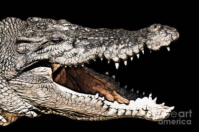 Crocodile Photograph - Jaws by Douglas Barnard