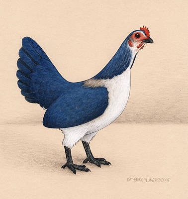 Hens Drawing - Jay Hen by Katherine Plumer