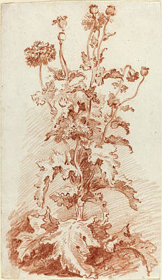 Red Poppies Drawing - Jean-baptiste Hüet, I French, 1745 - 1811 by Quint Lox