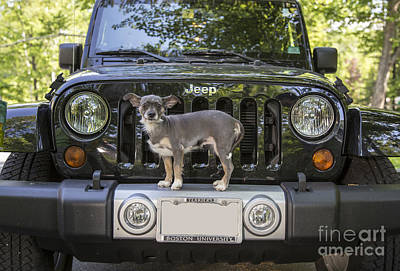 Photograph - Jeep Dog by Edward Fielding