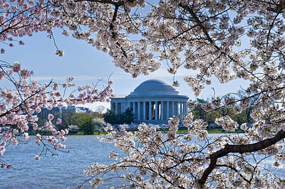 Photograph - Jefferson Memorial Cherry Blossoms Spring Washington Dc by David Zanzinger