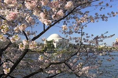 Photograph - Jefferson Memorial Through Cherry Blossoms by Willie Harper