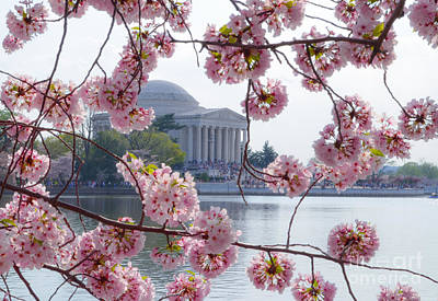 Photograph - Jefferson Memorial Through The Basin Blossoms by Jeff at JSJ Photography