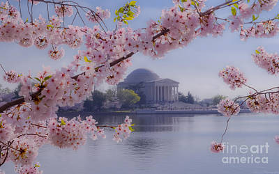Photograph - Jefferson Memorial Through The Blossoms by Jeff at JSJ Photography