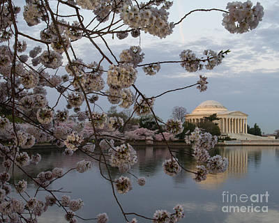 Photograph - Jefferson With Blossoms by Dale Nelson