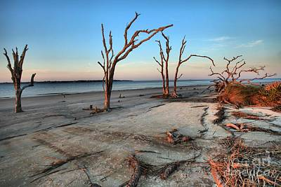 Photograph - Jekyll Island Dead Tree Beach by Adam Jewell