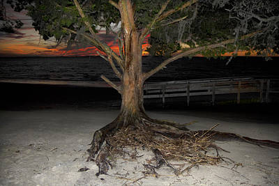 Driftwood Photograph - Jekyll Island Night Life Flash by Betsy Knapp