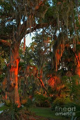 Photograph - Jekyll Island Sunset Oaks by Adam Jewell