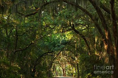 Photograph - Jekyll Island Tunnel Of Oaks by Adam Jewell
