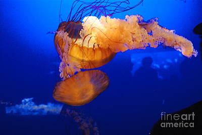 Photograph - Jelly Fish 2 by Mark McReynolds