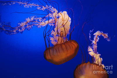 Photograph - Jelly Fish 3 by Mark McReynolds