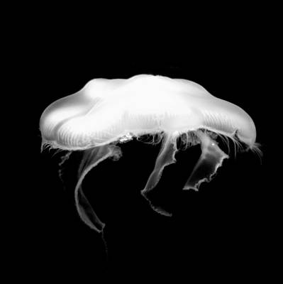 Photograph - Jelly by Jeremiah John McBride