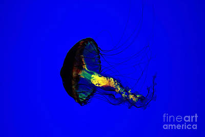 Jellyfish Original by Angelika Bentin