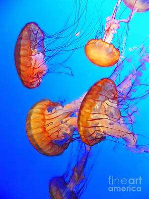 Photograph - Jellyfish II by Elizabeth Hoskinson