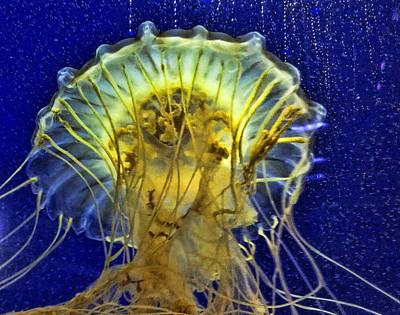 Photograph - Jellyfish by Janet Maloy