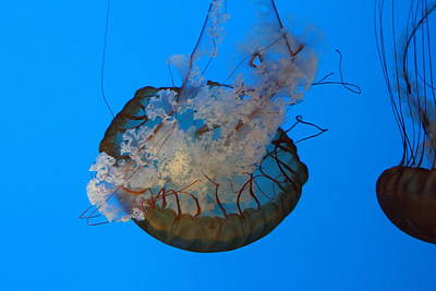 Jelly Photograph - Jellyfish - National Aquarium In Baltimore Md - 121224 by DC Photographer