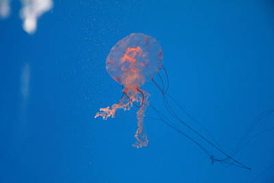 Inner Photograph - Jellyfish - National Aquarium In Baltimore Md - 121232 by DC Photographer