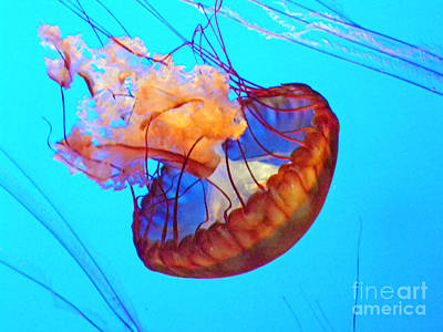 Jelly Fish Art Photograph - Jellyfish Vii by Elizabeth Hoskinson